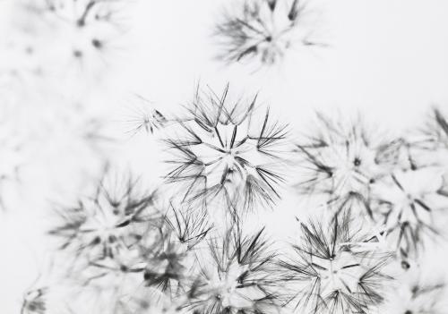 Blumengestalten Weihnachten 2108 ©Marlene Rahmann 102